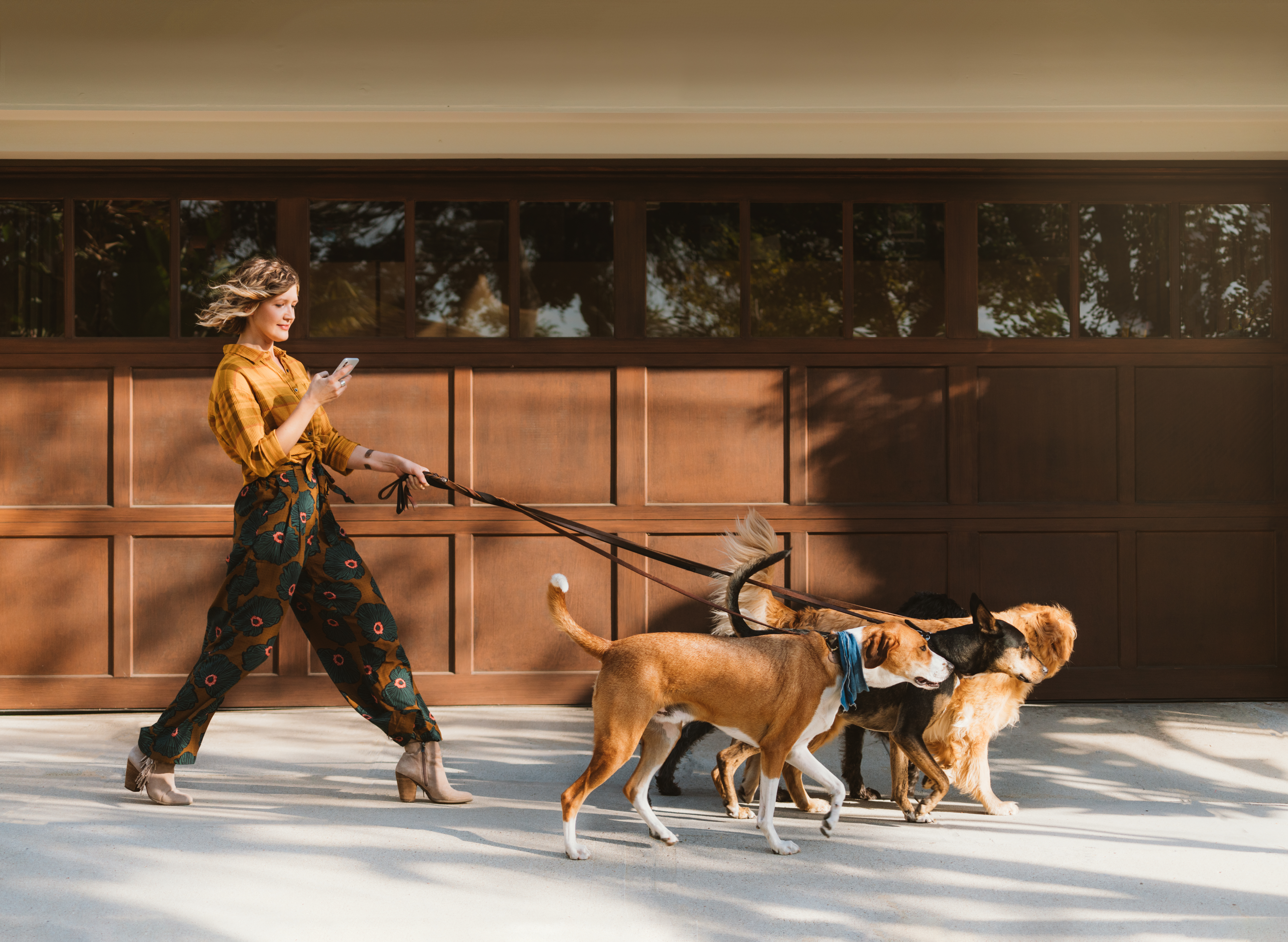 Woman walking dogs and looking at her phone